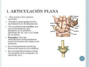 articulacion plana
