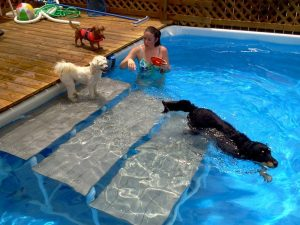 escalera para perros piscina