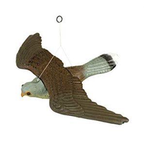 sonido halcon para ahuyentar palomas